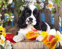 Puppyspaniel en bloemen Royalty-vrije Stock Afbeeldingen