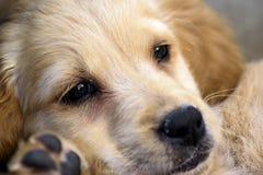 Puppyu Stock Image