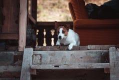 Puppyzitting op houten treden royalty-vrije stock foto