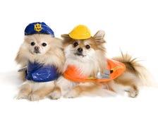 Pups di funzionamento Fotografia Stock Libera da Diritti