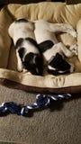 Pups stock photos