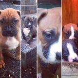 Pups Stock Photo