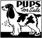 Pups For Sale Stock Images