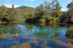 PuPu Springs Near Takaka in Golden Bay, New Zealand. Landscape view of the famous clear waters of PuPu (Maori name: Te Waikoropupu) Springs near Takaka in stock photo