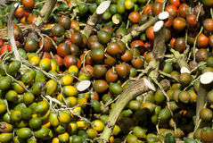 Pupunheira fruits Stock Photos