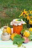 Puré vegetal Imagen de archivo libre de regalías