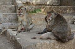 Pura Luhur Uluwatu寺庙巴厘岛猴子  免版税图库摄影