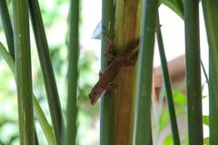 Pura Vida - c'est beau Costa Rica photos stock