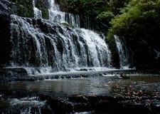 Purakaunuidalingen en bomen rond in Catlins in het Zuideneiland in Nieuw Zeeland stock fotografie