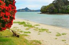 Purangi, praia dos cozinheiros, Whitianga, Coromandel, Nova Zelândia foto de stock