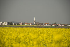 Purbach in Austria. Yellow canola field in Burgenland royalty free stock photography