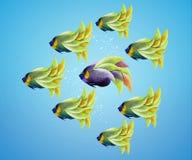 Purble angelfish between group of green angelfish Royalty Free Stock Photo