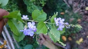 purble blommor arkivbild