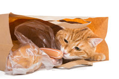 Purchase. Red cat in a paper bag with the food, isolated Stock Photos