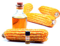 Pure bio fuel. Bottles with ripe corn Stock Photography