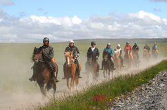 Pure bred Iceland wild ponies being ridden for fun. Stock Photos