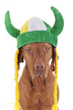 Irish warrior dog Stock Photo