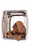 Dog laying in crate Royalty Free Stock Photo