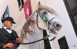Saint john horse festivity wide. A pure brood horse is ridden on the village streets during local Saint John festivities in Ciutadella in the island of Minorca Stock Photography
