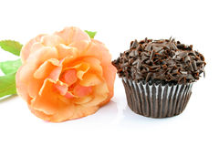 Pure Chocolate Cupcake Stock Images