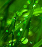 Pure Delicate Green  Grass Morning Abstract Royalty Free Stock Photo
