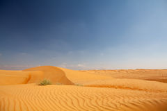 Pure desert with dunes and bue sky in background. Pure desert with dunes and bue sky in the background stock photography
