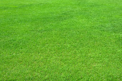 Pure empty green grass field cut Royalty Free Stock Photo