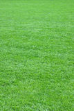 Pure empty green grass field cut Stock Image