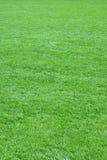 Pure empty green grass field cut. Vertical Stock Image