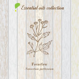 Pure essential oil collection, feverfew. Wooden texture background. Vector illustration Royalty Free Stock Photography