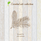 Pure essential oil collection, grand fir. Wooden texture background. Vector illustration Royalty Free Stock Photos