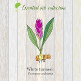 Pure essential oil collection, turmeric. Wooden texture background Stock Photos