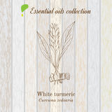 Pure essential oil collection, turmeric. Wooden texture background Royalty Free Stock Photography