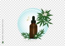 A Pure extract oil from Cannabis or Marijuana flower and leaf on transparency background  with CBD strain for medical tre. A  of Pure extract oil from Cannabis stock illustration