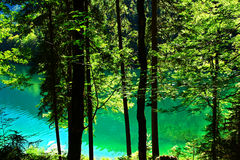 Pure green  nature Royalty Free Stock Photo