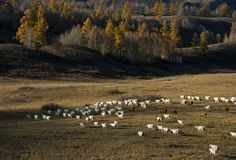 Pure Land - Kanas Royalty Free Stock Images