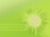 Pure lime. Colorized sunflower on a background Royalty Free Illustration