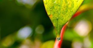 Pure macro water. Macro shot of green leaf with water drop Stock Photos