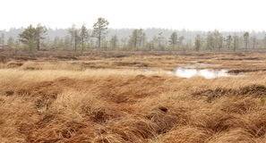 Pure marsh landscape in Estonia Stock Images