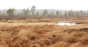 Pure marsh landscape in Estonia Stock Images