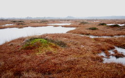 Pure marsh landscape in Estonia Stock Image
