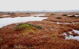 Free Pure Marsh Landscape In Estonia Stock Image - 4024431