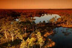 Free Pure Marsh Landscape In Estonia Royalty Free Stock Image - 5046686