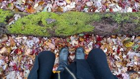 Pure Michigan Woodlands. Fall in Michigan displays an array of heart calming colors. This moss covered logged has an array of life occuring on it right now Royalty Free Stock Image