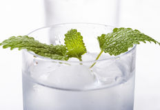 Pure mineral water with ice. Glasses full of pure mineral water with ice Stock Image
