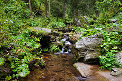Pure mountain creek in deep woods Stock Photography