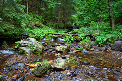 Pure mountain creek in a forest Stock Images