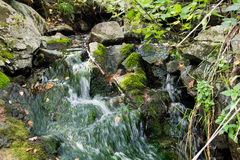 Pure mountain spring flows among stones covered with moss Stock Photos