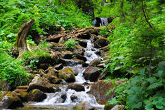 Pure mountain stream Stock Image