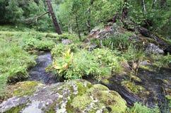 Pure mountain stream. Flowing through the mountainous terrain Royalty Free Stock Photo